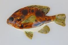 Brocken fish 6