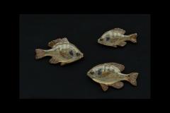 sunfish 2_edited-1