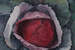 miller_1_Red Cabbage_